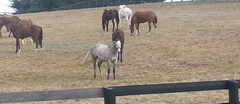 Historic Horse Industry Tours
